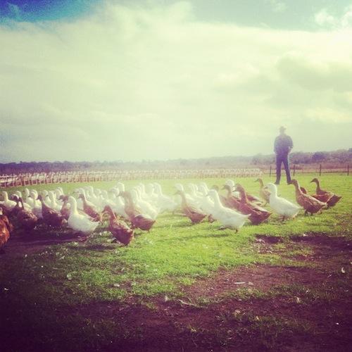Worden Farm Florida